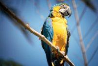 Atraksi Bali Bird Park yang Tidak Boleh Terlewatkan